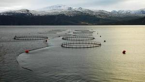 Zalmkwekerij Noorwegen
